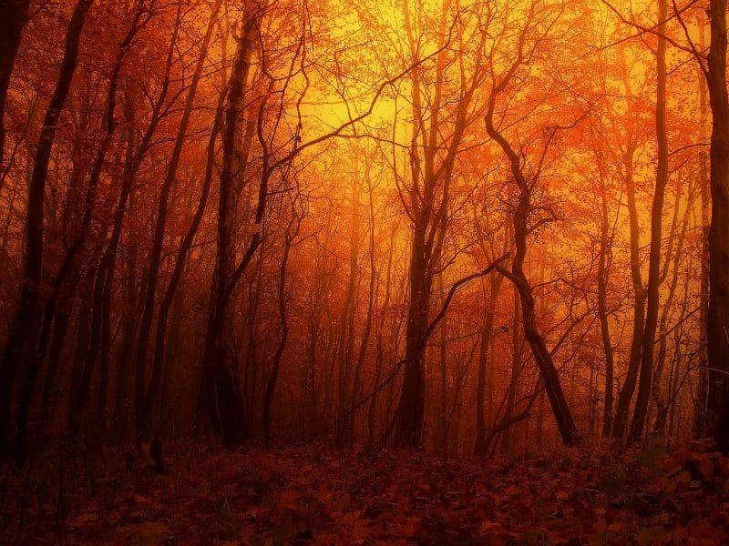 bos in een oranje gloed